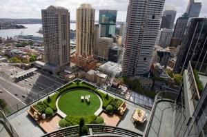 Green Rooftop in Sydney CBD