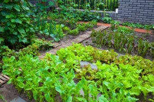 Jamesons_Community Gardens_310815