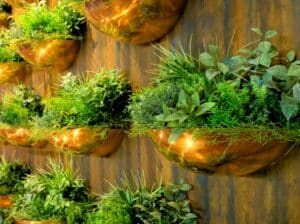 fresh herbs growing in rows of shiny copper wall pots